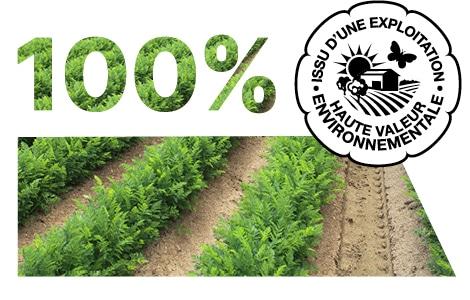 Champ de carotte avec logo issu d'une exploitation de Haute Valeur Environnementale.