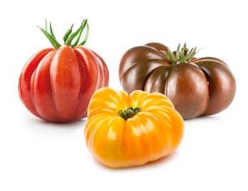 Composition de tomates côtelées, rouge, jaune et noire du Potager de Jade