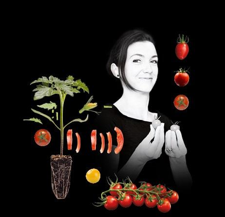 Pied de tomate, tomate grappe avec portrait d'Anne-Claire, productrice de tomates cerise et tomates cocktail du Potager de Jade