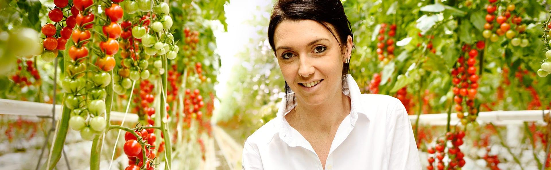 Anne-Claire au milieu des plants de tomates, dans sa serre de tomates cerise en région nantaise