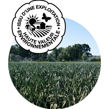 Champ de poireaux primeur et logo Haute Valeur Environnementale