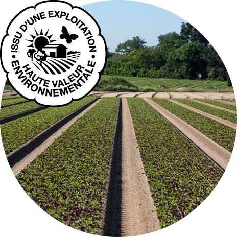 Planches de jeunes pousses mélangées en perspective, avec logo de certification issu d'une exploitation de Haute Valeur Environnementale