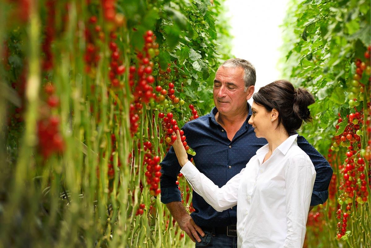 Anne-Claire et Dominique, dans une serre de tomates cerise ronde du Potager de Jade