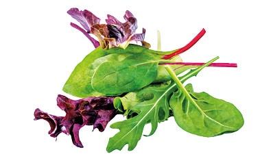Composition de feuilles de jeunes pousses de salades mélangées du Potager de Jade