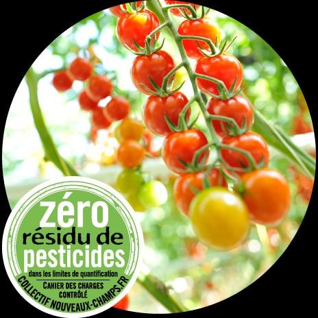 Plants de tomates cerise rouges avec détail sur une grappe et logo Zéro Résidu de Pesticides