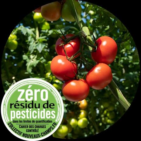 Plants de tomates rondes avec détail sur une grappe et logo Zéro Résidu de Pesticides