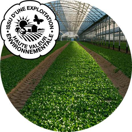 Planches de mâche sous abri multichapelle avec certification Haute valeur Environnementale