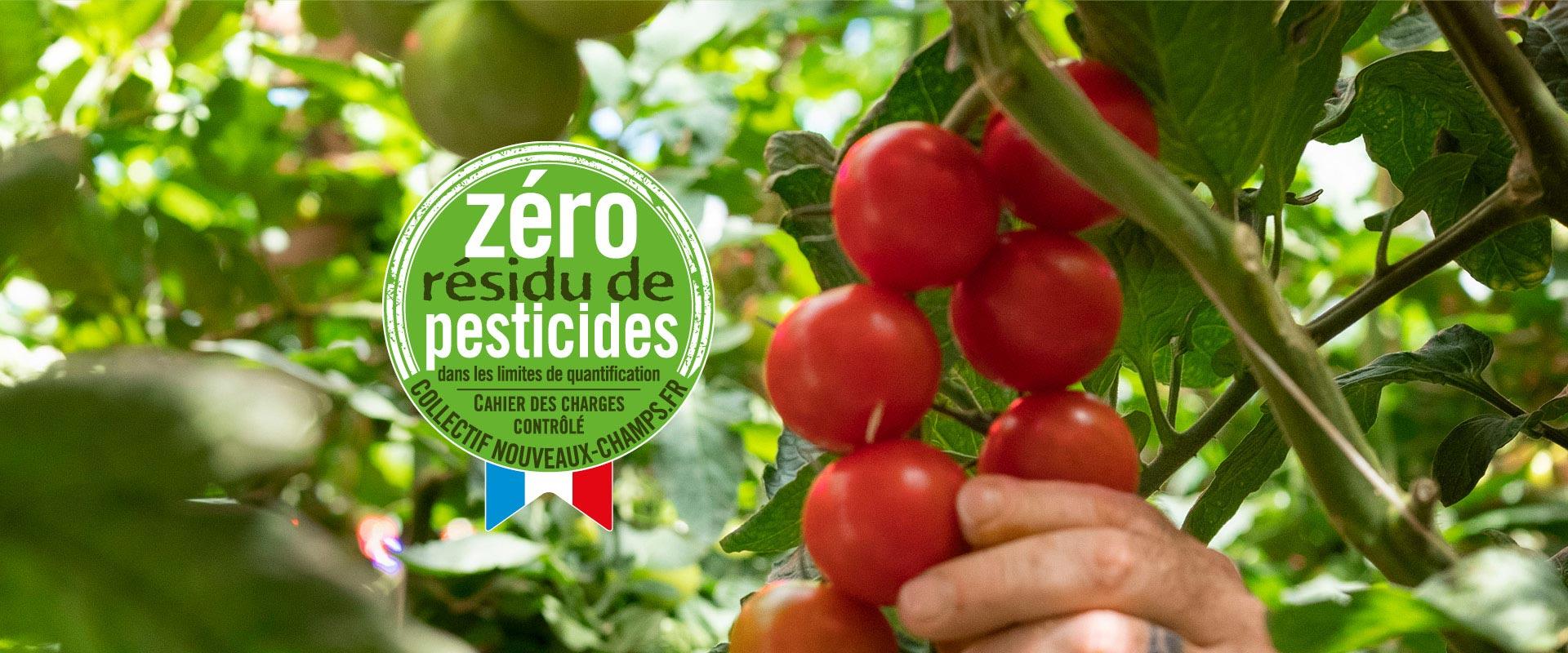 Détail d'une grappe de tomates cocktail sur pieds de tomates et logo Zéro Résidu de Pesticides avec petit drapeau français