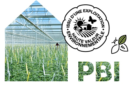 Intérieur d'une serre, logo issu d'une exploitation de Haute Valeur Environnementale, PBI et picto de pollinisateur