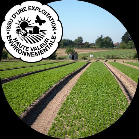 Champ de jeunes pousses en planches avec paysage de campagne nantaise en arrière-plan et logo HVE