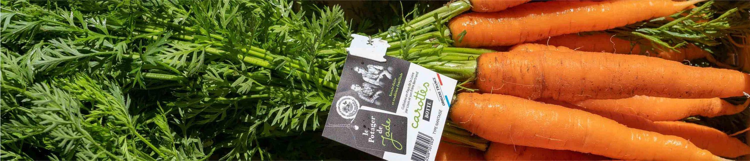 Gros plan sur une botte de carottes avec étiquette du Potager de Jade
