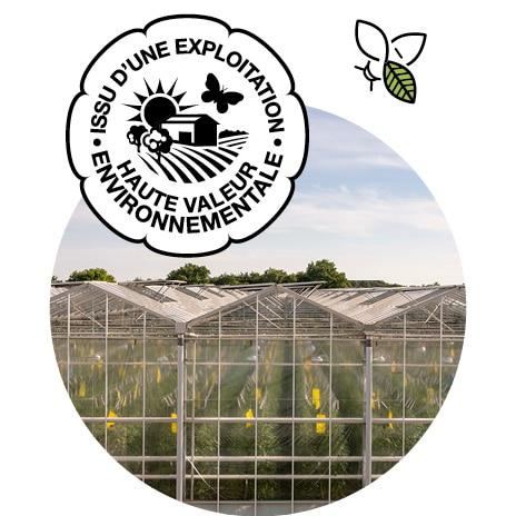 Extérieur d'une serre verre de tomates, logo HVE et picto pollinisateur