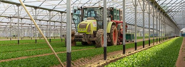 Récolte de mâche : tracteur dans un champ sous grand abri non chauffé