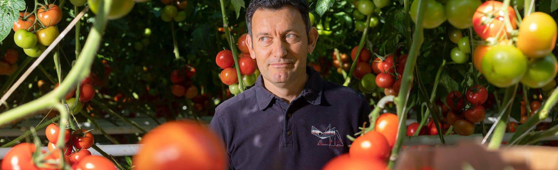 Yannick au milieu des plants de tomates, dans sa serre de tomates grappe