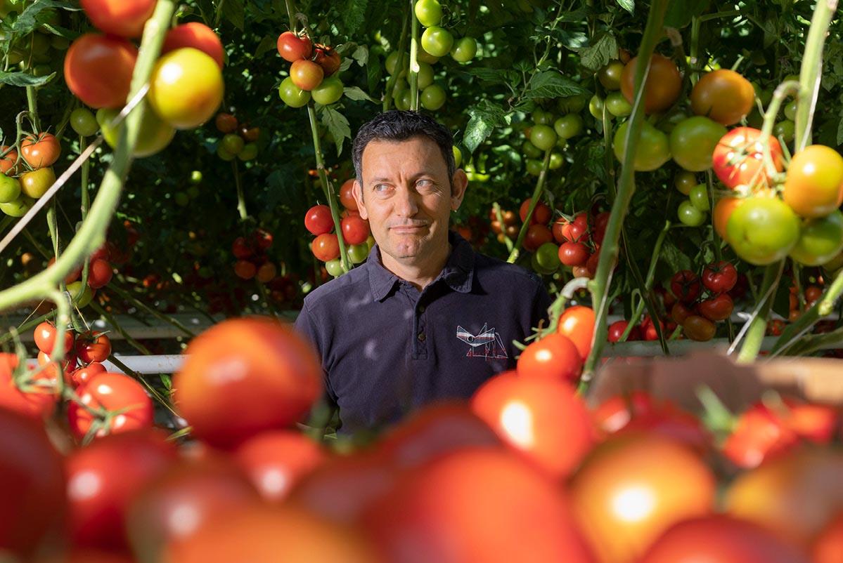 Yannick devant ses plants de tomates rondes en grappe et récolte de tomates en premier plan