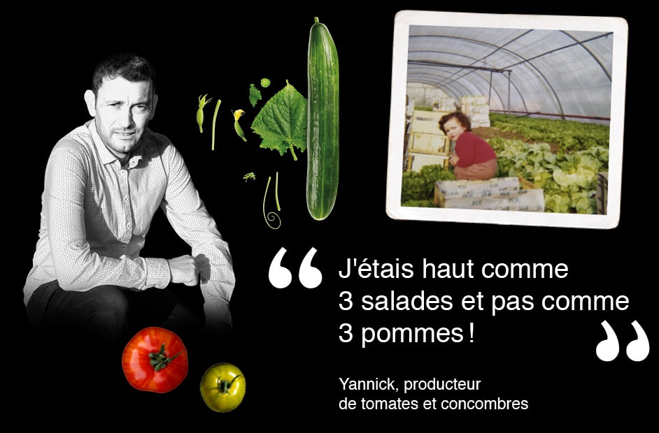 Portrait de Yannick, producteur de tomates et concombres avec photo de Thomas à l'âge de 3 ans dans la serre de ses parents où poussent des salades et texte «J'étais haut comme3 salades et pas comme 3 pommes!»