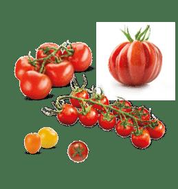 Assortiment de tomates cerise, tomate en grappe et tomate ancienne